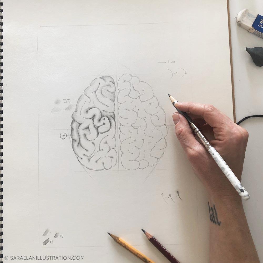 Bozzetto anatomico cervello