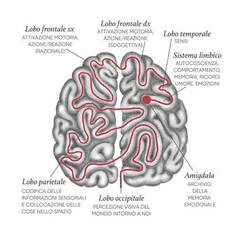 Cervello labirinto