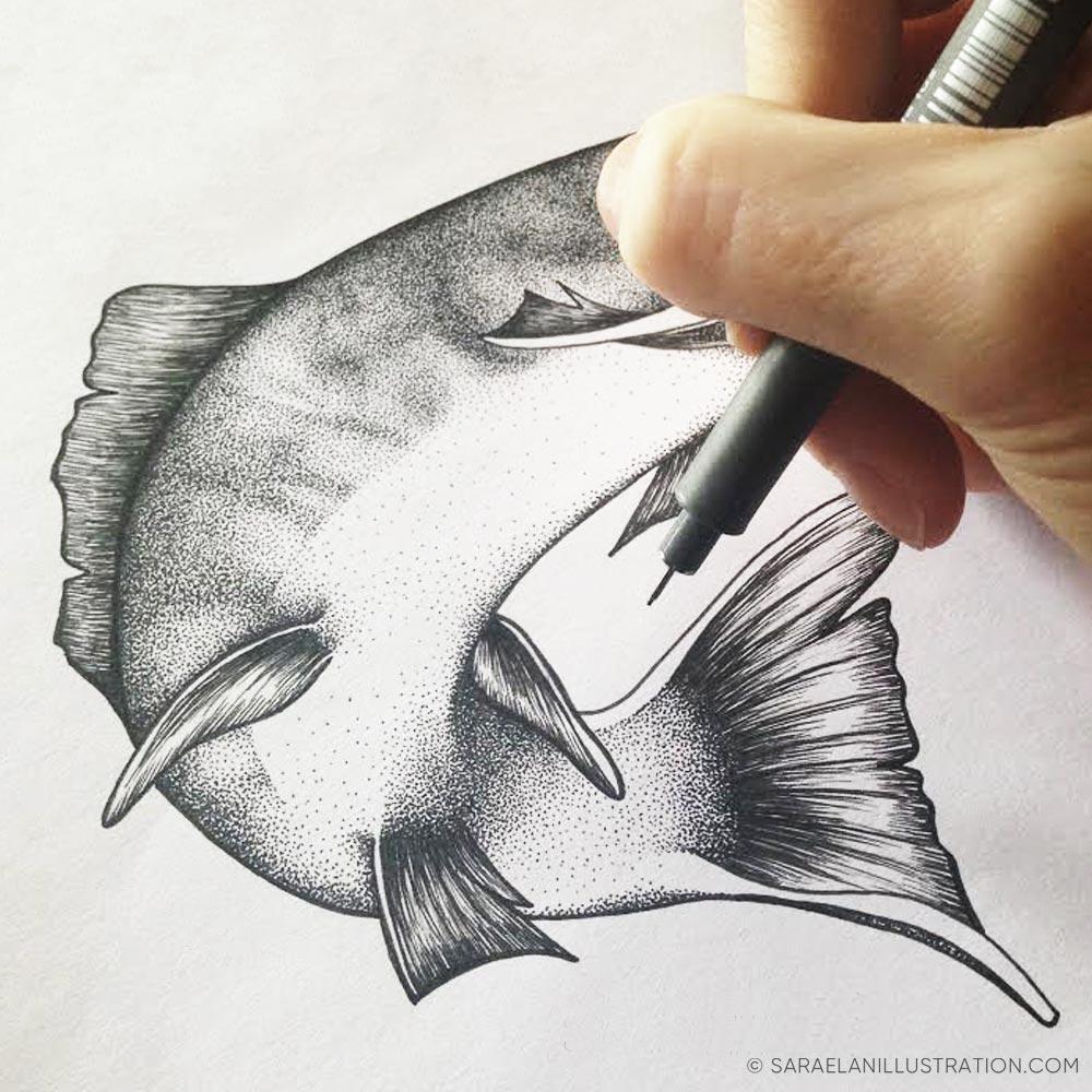 Disegnando una trota