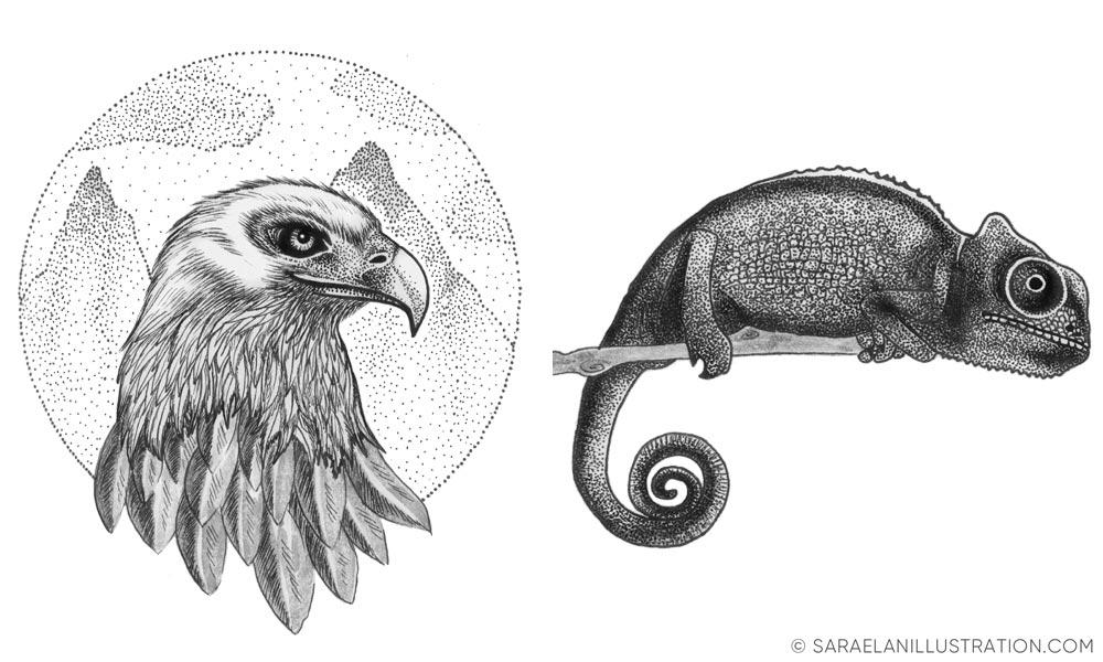 Aquila e camaleonte - disegni realizzati in inchiostro