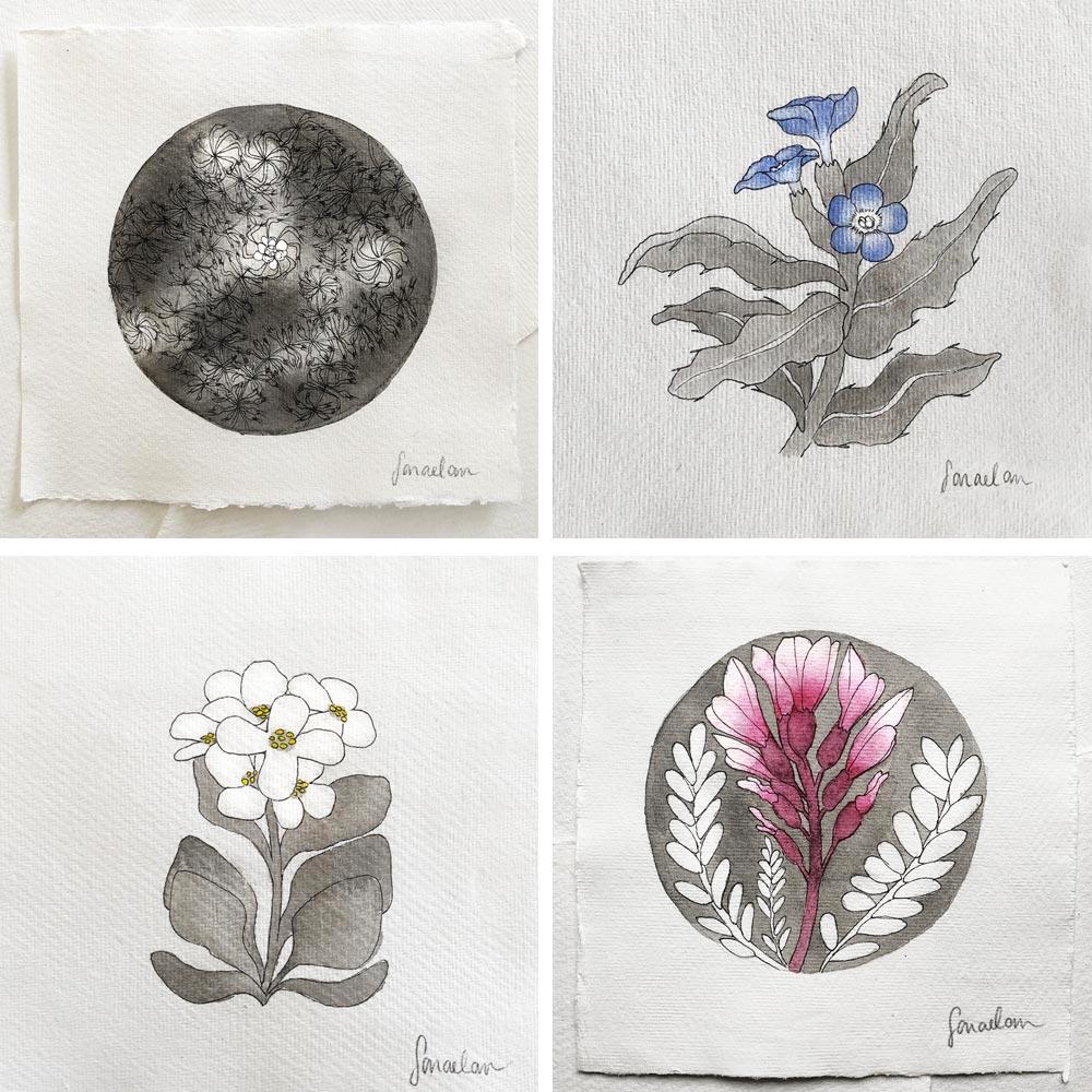 Disegni della flora italiana protetta rara e a rischio estinzione lista rossa IUCN