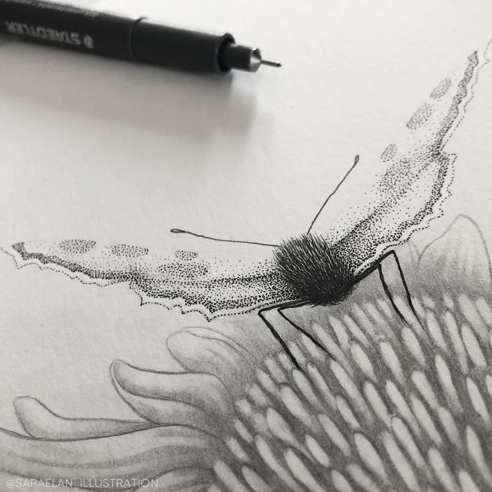 Farfalla disegnata in dotwork