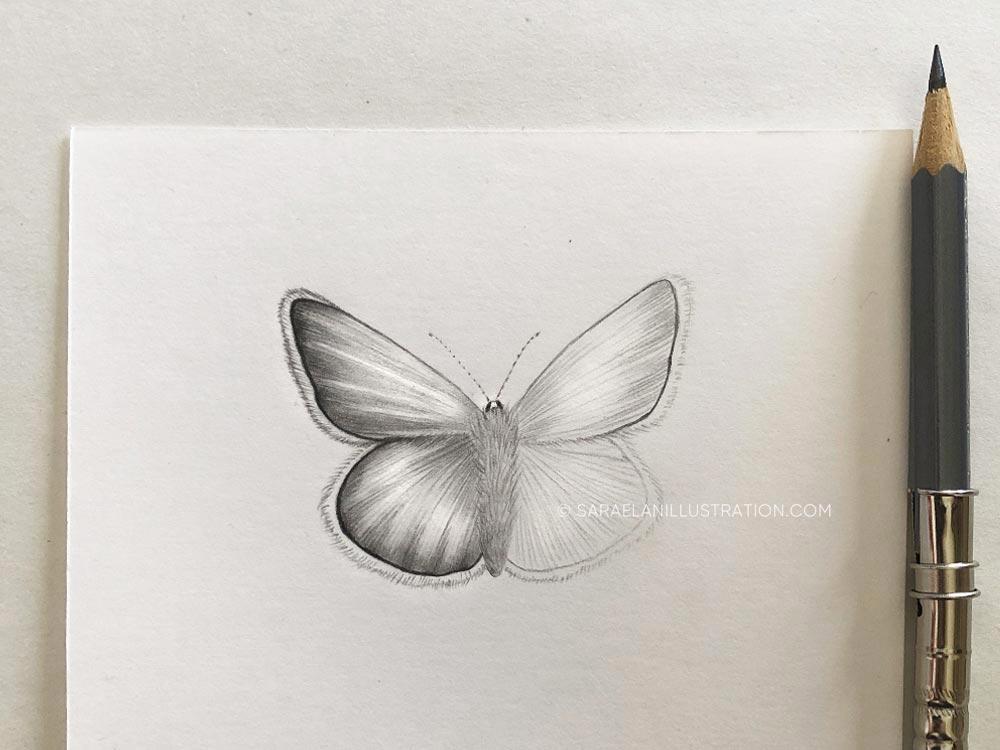 Disegnare farfalle-farfalla disegnata a matita