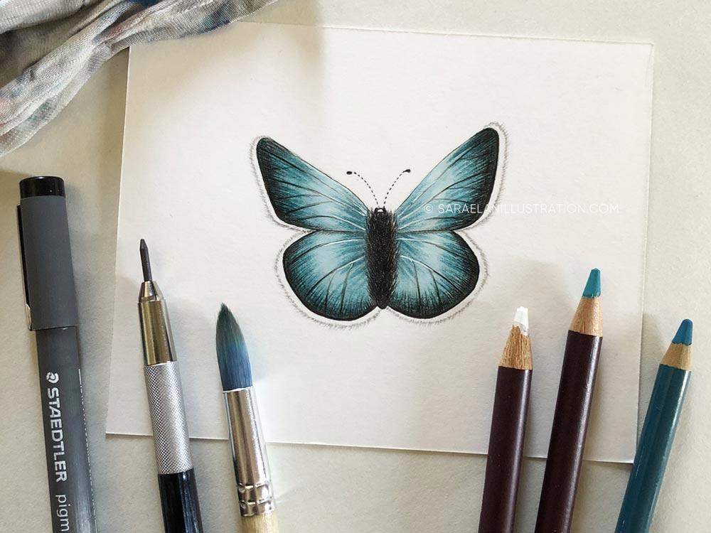 Disegnare farfalle-farfalla disegnata con tecniche miste