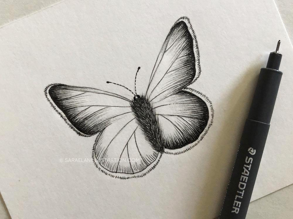 Disegnare farfalle-farfalla disegnata in inchiostro
