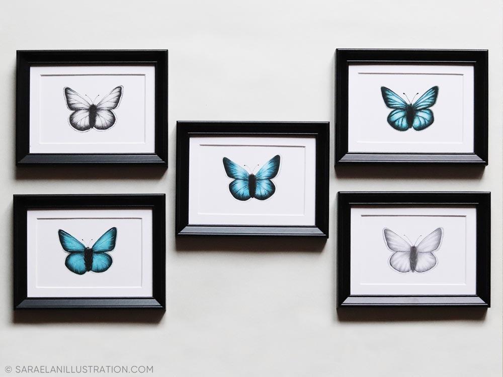 Composizione tante piccole cornici con stampe di insetti