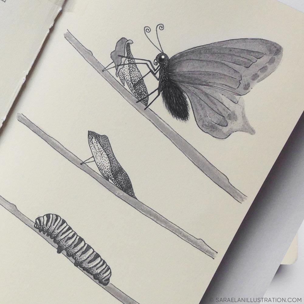 Disegno di trasformazione del bruco in farfalla