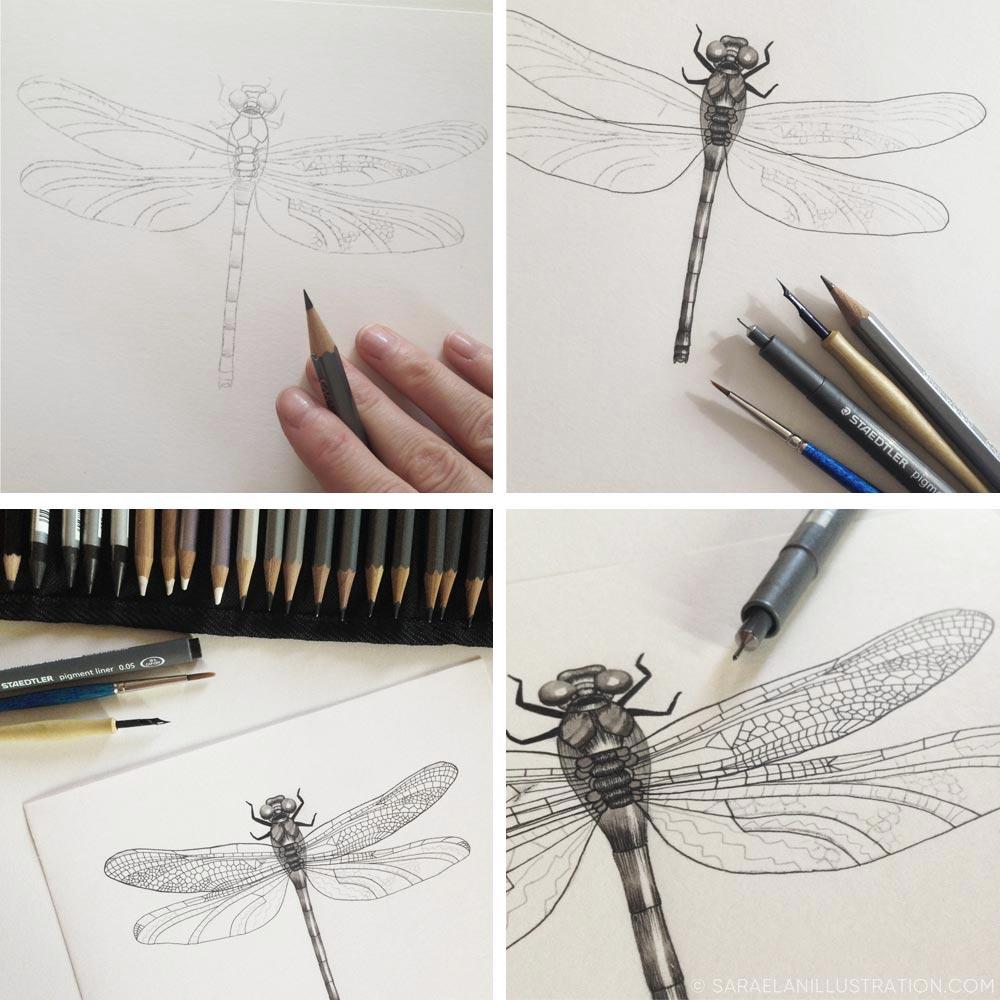 disegno e significato della libellula - illustrazione a matita e inchiostro