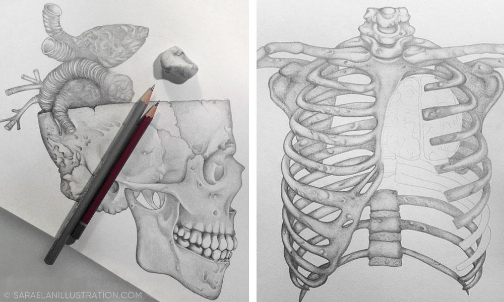 Costato anatomico disegnato a matita da Sara Elan Donati