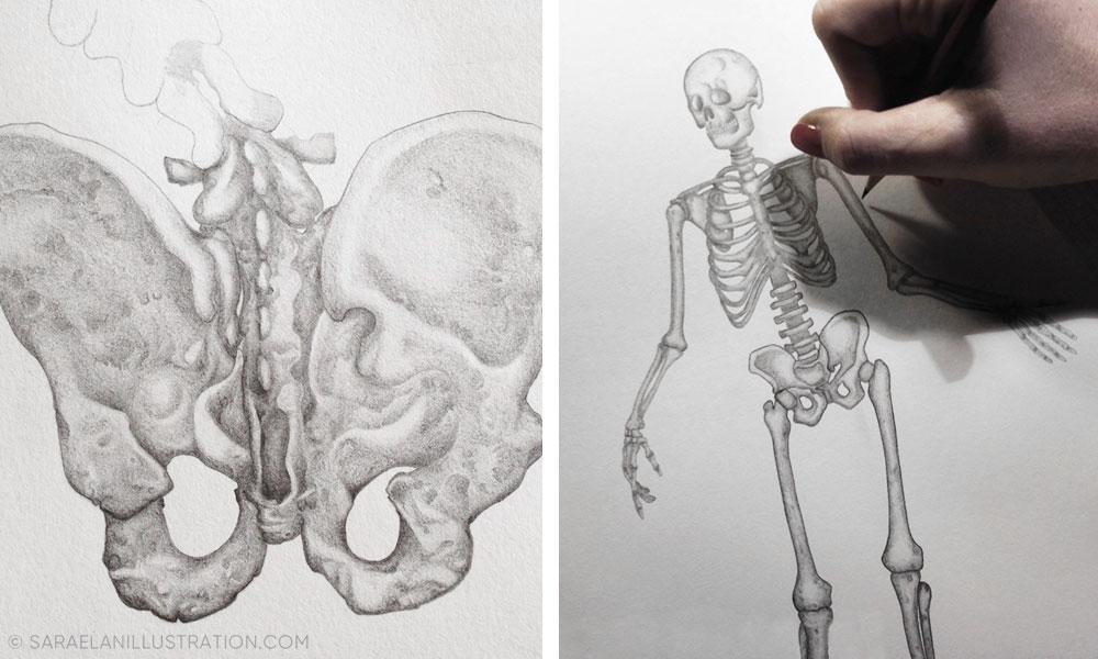 Disegni anatomici a matita - illustrazioni anatomiche disegnate da Sara Elan Donati