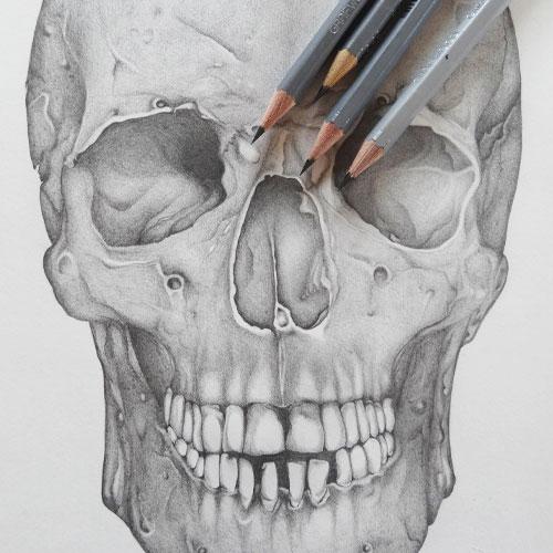 Teschio anatomico disegnato a matita
