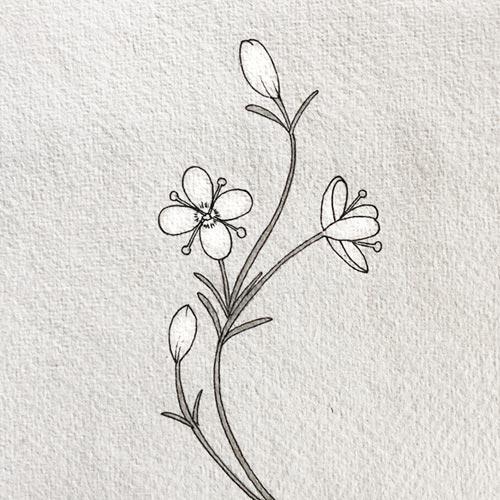 Flora italiana protetta