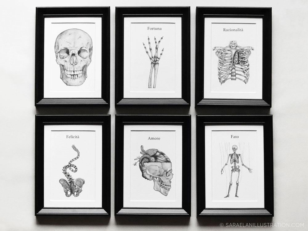 Stampe anatomiche per composizione di tante piccole cornici di Sara Elan Donati